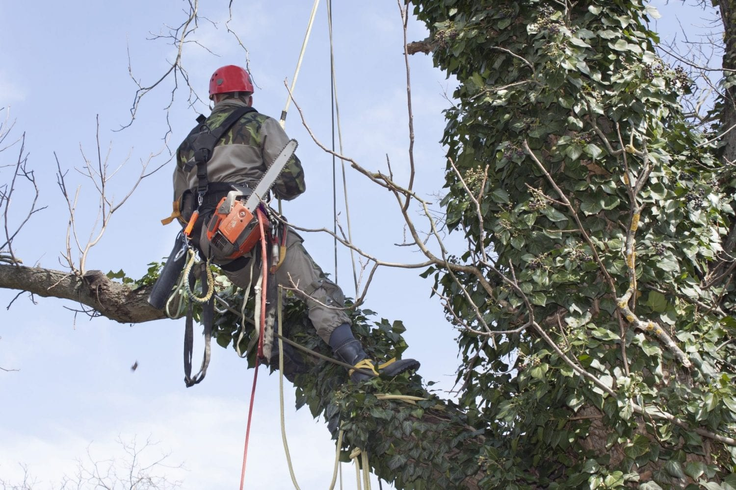 tree surgeons bishops waltham