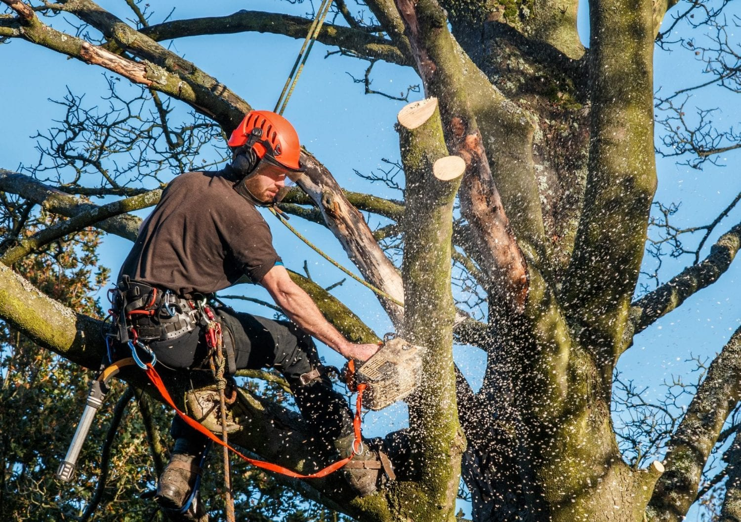 tree surgeons eastleigh