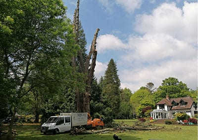 Tree Surgeons Southampton UK
