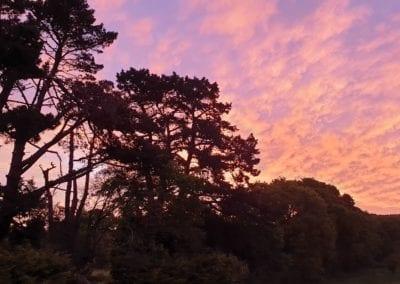 Monterey Pines (11)