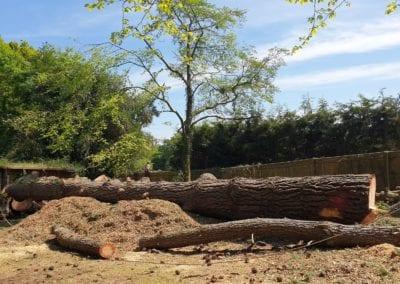 Monterey Pines (110)