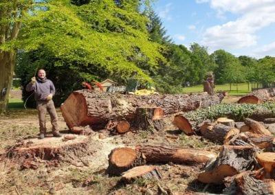 Monterey Pines (128)