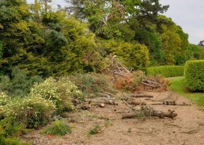 Monterey Pines (16)