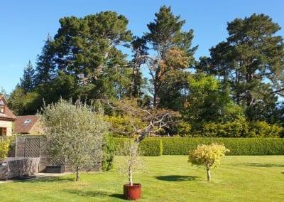 Monterey Pines (2)
