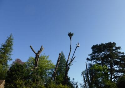 Monterey Pines (21)