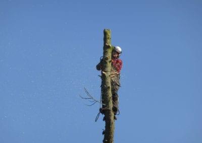 Monterey Pines (26)