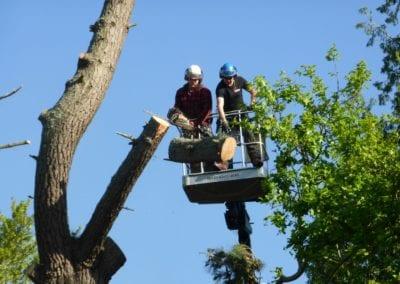 Monterey Pines (34)