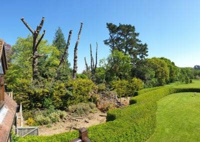 Monterey Pines (40)