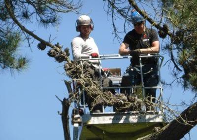 Monterey Pines (41)