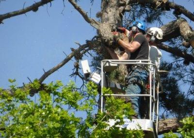Monterey Pines (51)