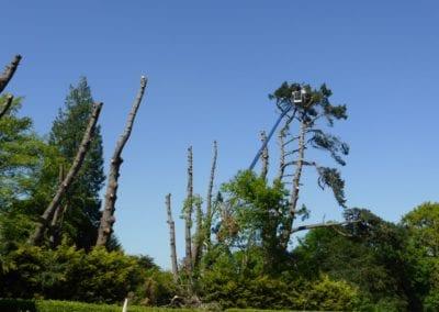 Monterey Pines (55)