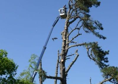 Monterey Pines (58)