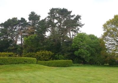 Monterey Pines (6)
