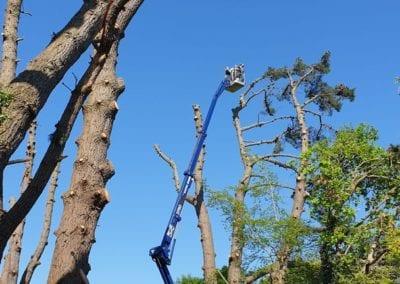 Monterey Pines (62)