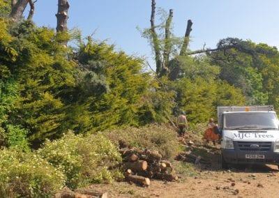 Monterey Pines (78)