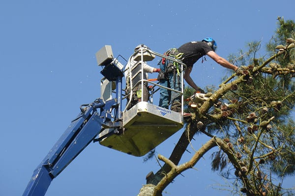 tree work eastleigh