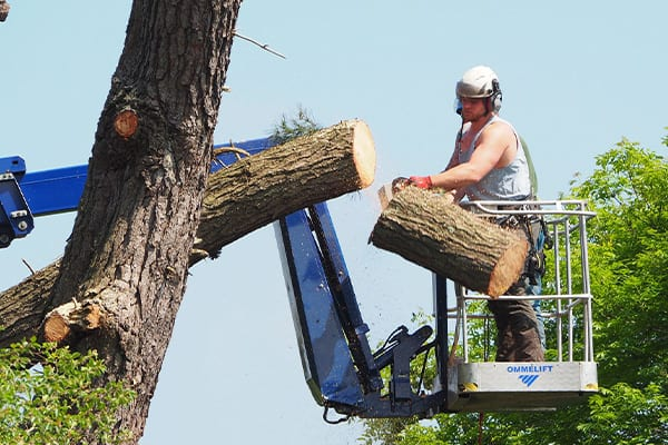 tree surgeons romsey